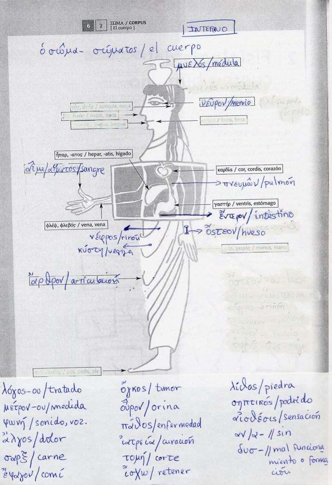 Helenismos sobre el cuerpo humano (2/2)