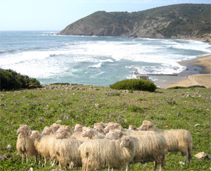 lana - Tetto in pura lana vergine di pecora sarda 24