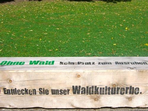 il verde - Il bosco non è solo una miniera di legno 9
