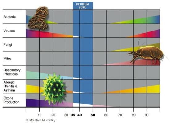 comprendere la muffa - Relazione tra Covid-19, muffa e inquinamento dell'aria 13