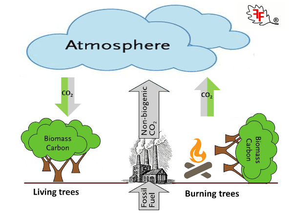 riscaldamento a legna - Riscaldamento a legna, energia grigia ed emissioni di CO2 8