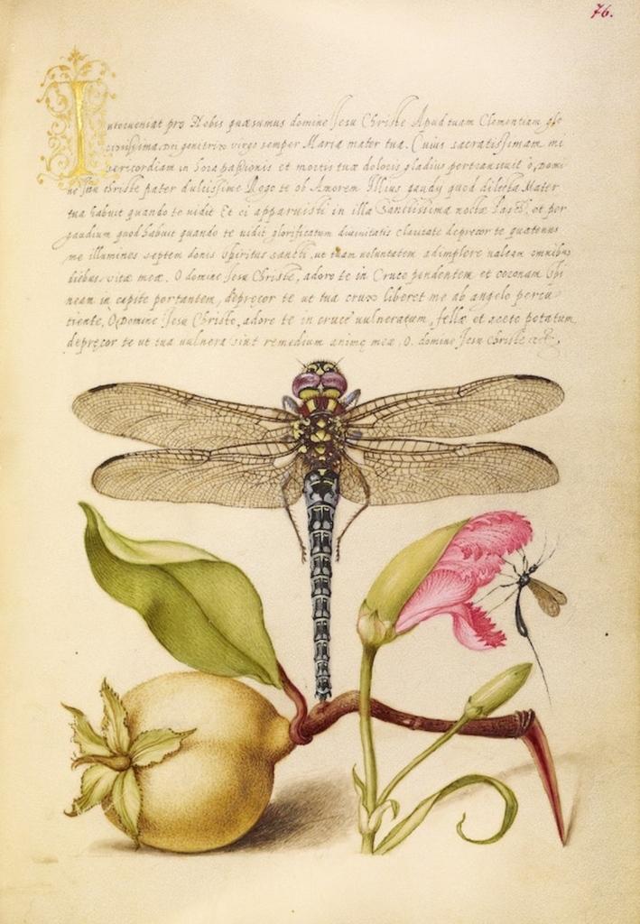 De hadas y libélulas. Leyenda celta sobre su naturaleza mágica.