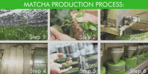 The Steps of Matcha Production