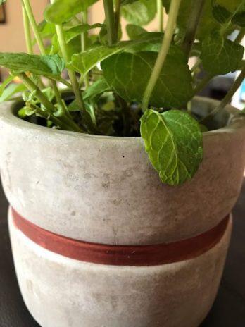Pot Gris/Or en Ciment