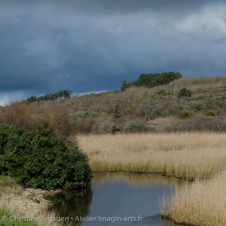 paysage rivière et roseaux