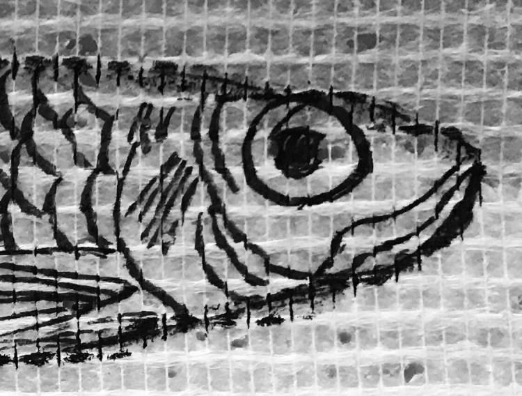 détail sur la tête de la sardine