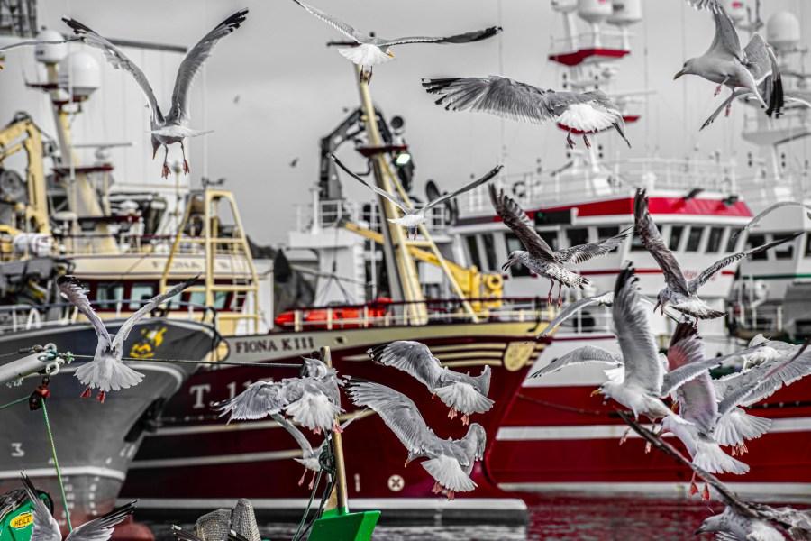 photographie Hocine Saad / Douarnenez port de pêche 02