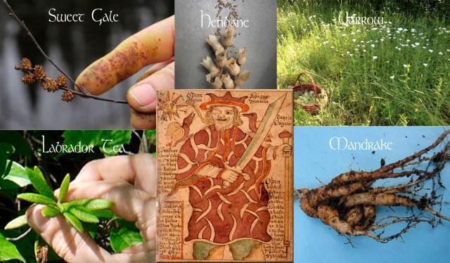 Odins Eye Plants copy