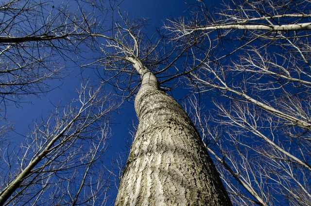 trees-without-leaves-tree-nature