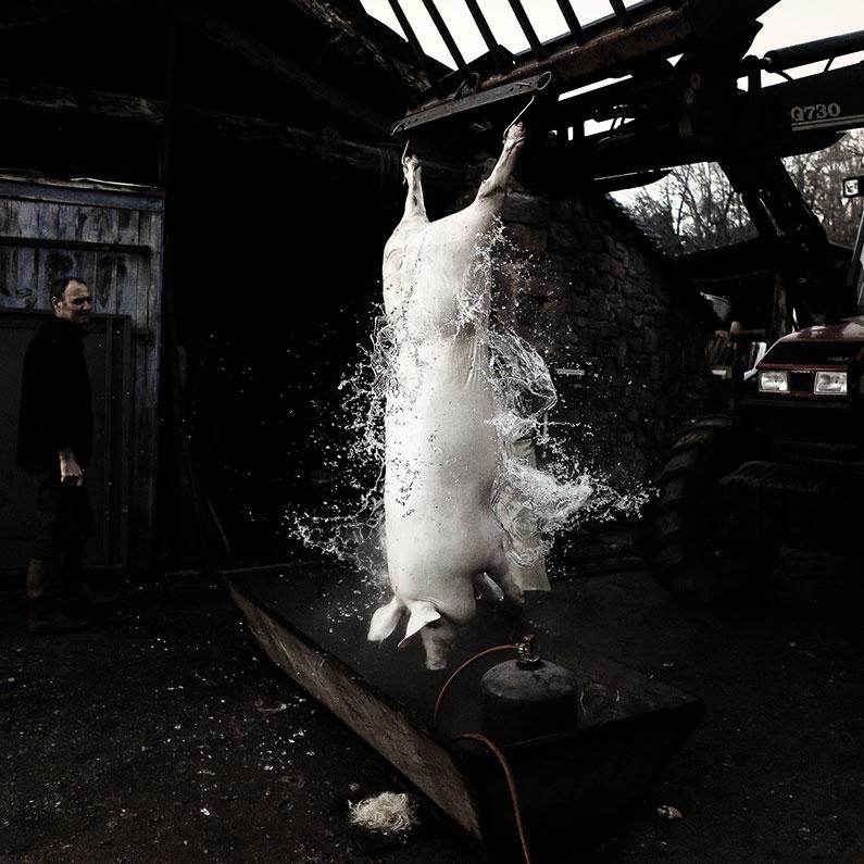 En Périgord où le cochon était la viande par excellence, on n'employait pas le mot porc. On disait toujours le cochon ou, avec respect, Le Monsieur : « Lou Moussur ».