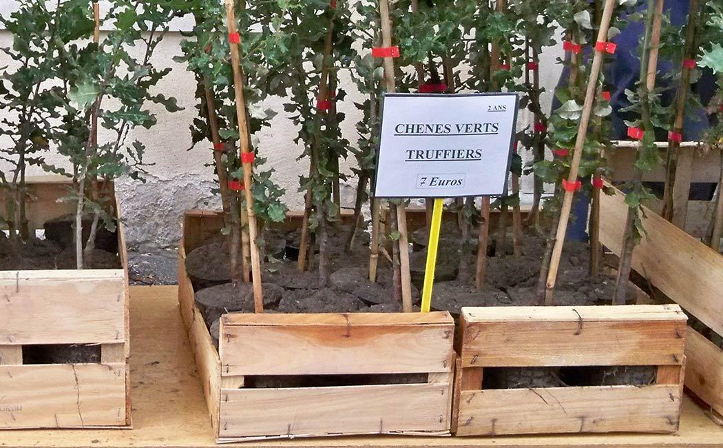 Truffières et sols truffiers