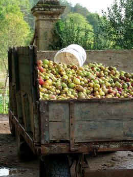 cidre-tombereau-de-pommes