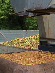 puree-de-pommes-vertical