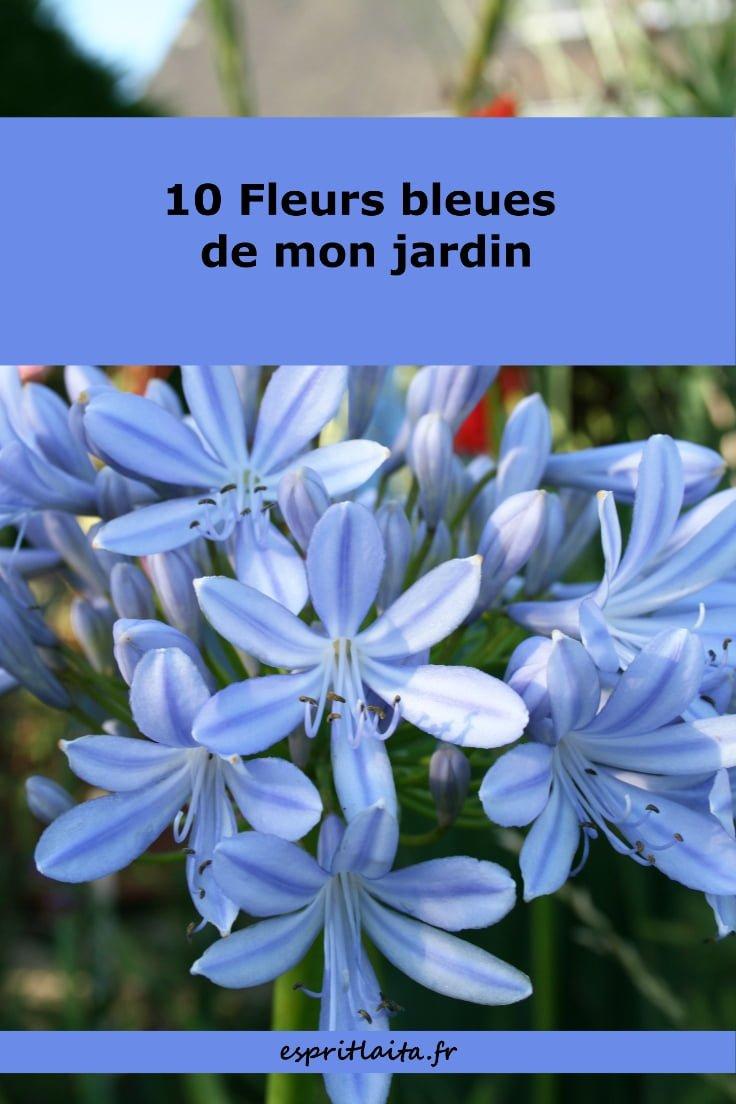 10 fleurs bleues