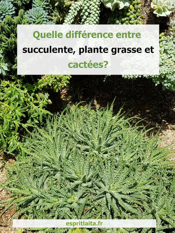 différence entre succulente, plante grasse et cactée