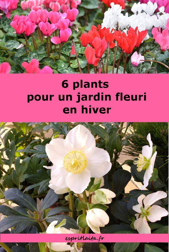 6 plants fleuris en hiver