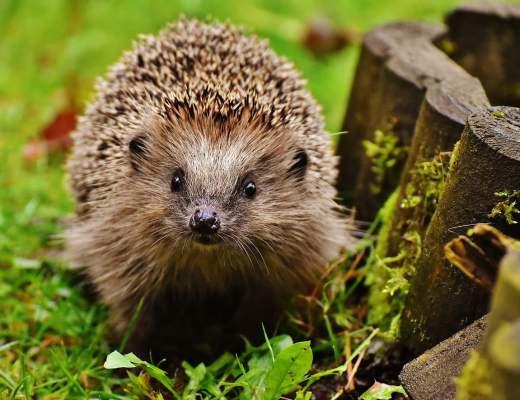 attirer les petits animaux au jardin