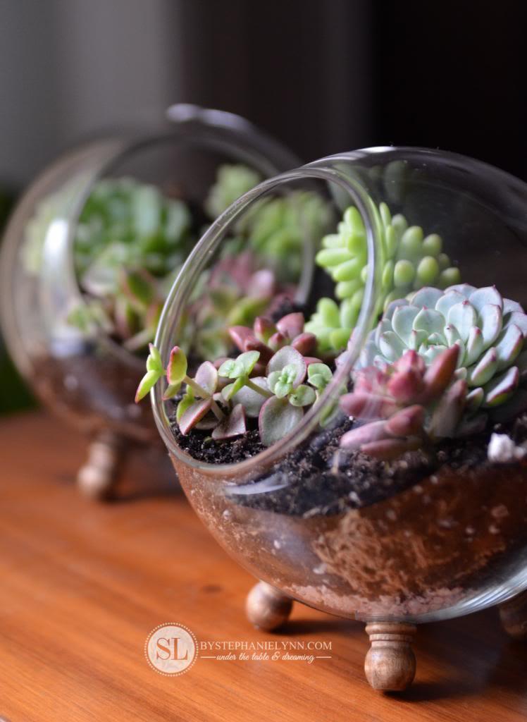 globe terrarium succulente
