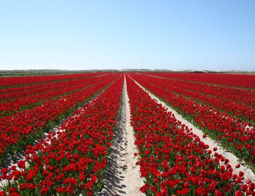 meilleurs blogs de jardinage et de jardin potager
