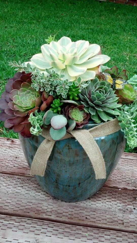 compostion de succulentes et plantes grasses