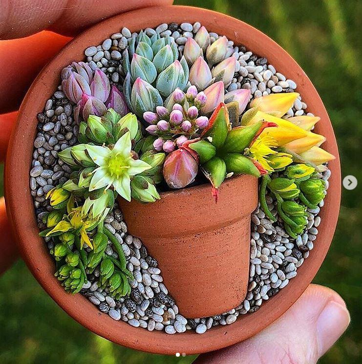 composition succulentes pot in pot