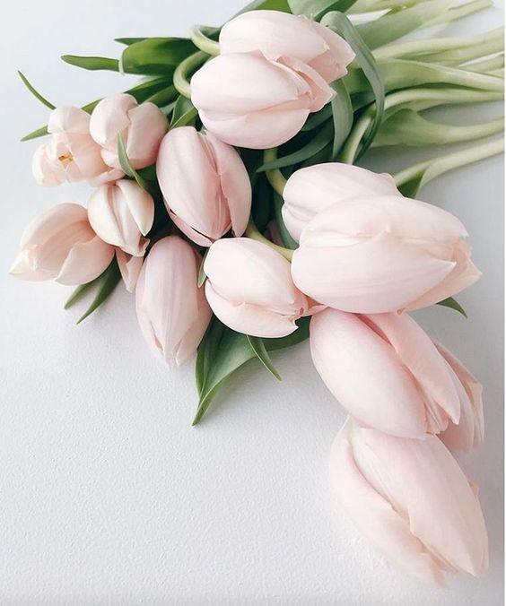 Tulipes - Fleurs roses en bouquets