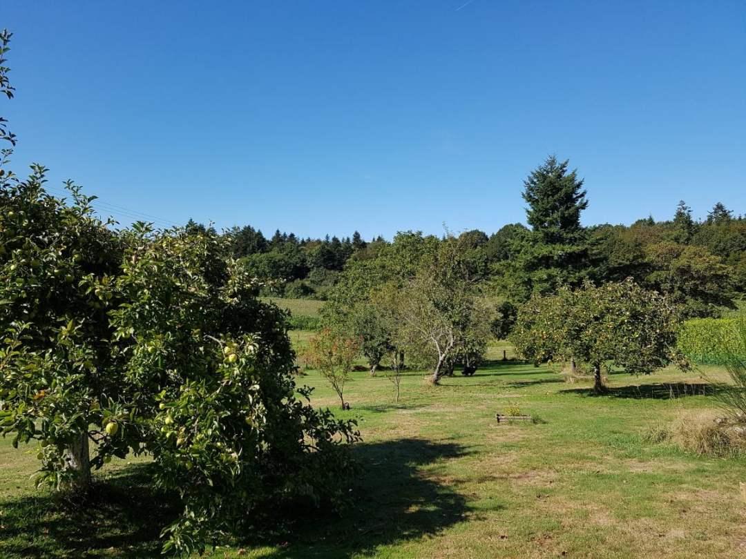 Le jardin verger en septembre - pommiers