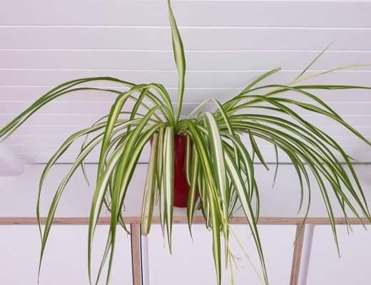 10 plantes graphiques et photogéniques