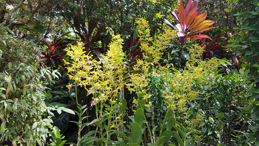 Jardin orchidées Singapour