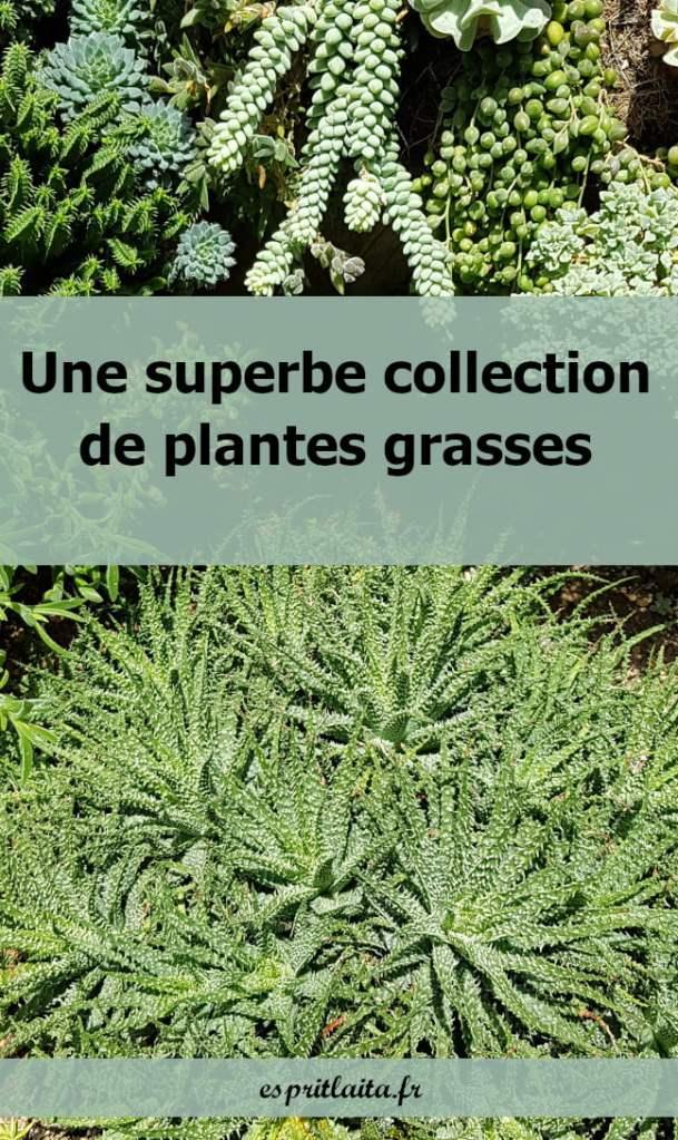Collection de plantes grasses et succulentes des grandes serres de Singapour.