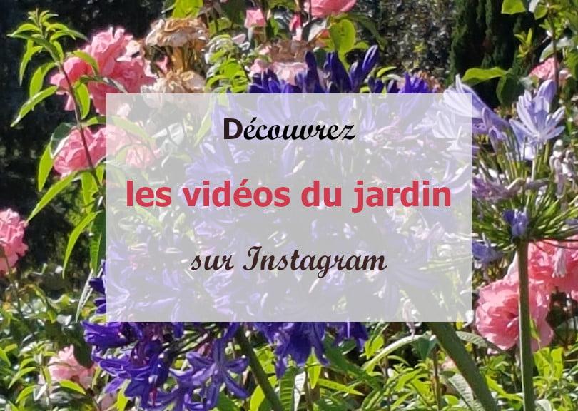 Les vidéos du jardin
