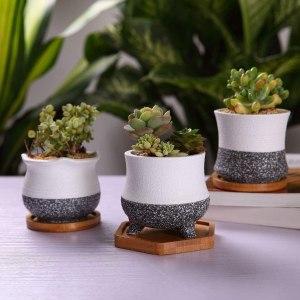 petits pots pour petites plantes succulentes