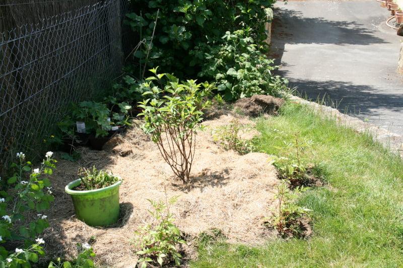 Aménagement d'un massif hortensia et hydrangea Vanille-Fraise
