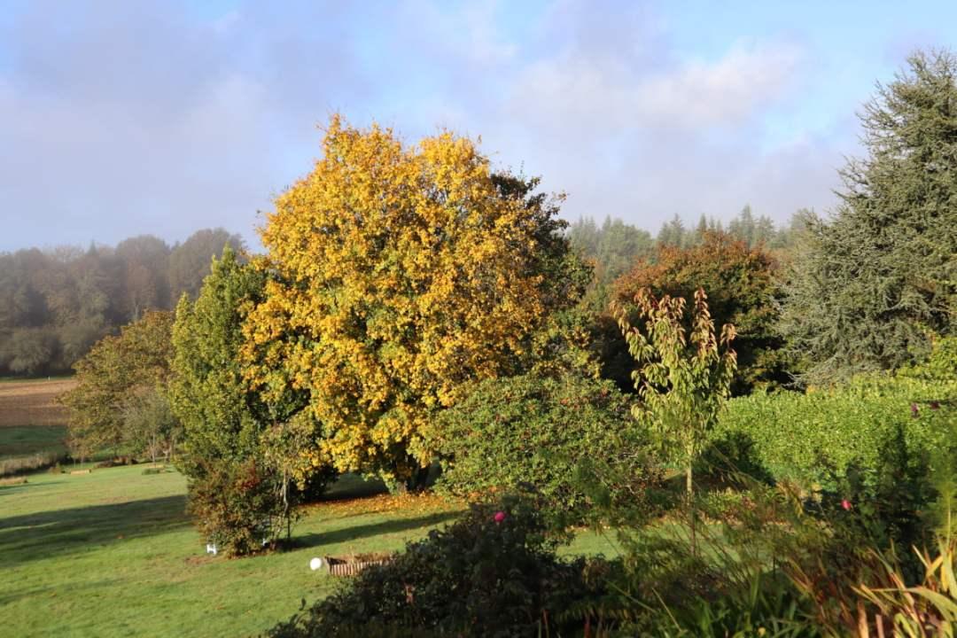 travaux d'automne au jardin