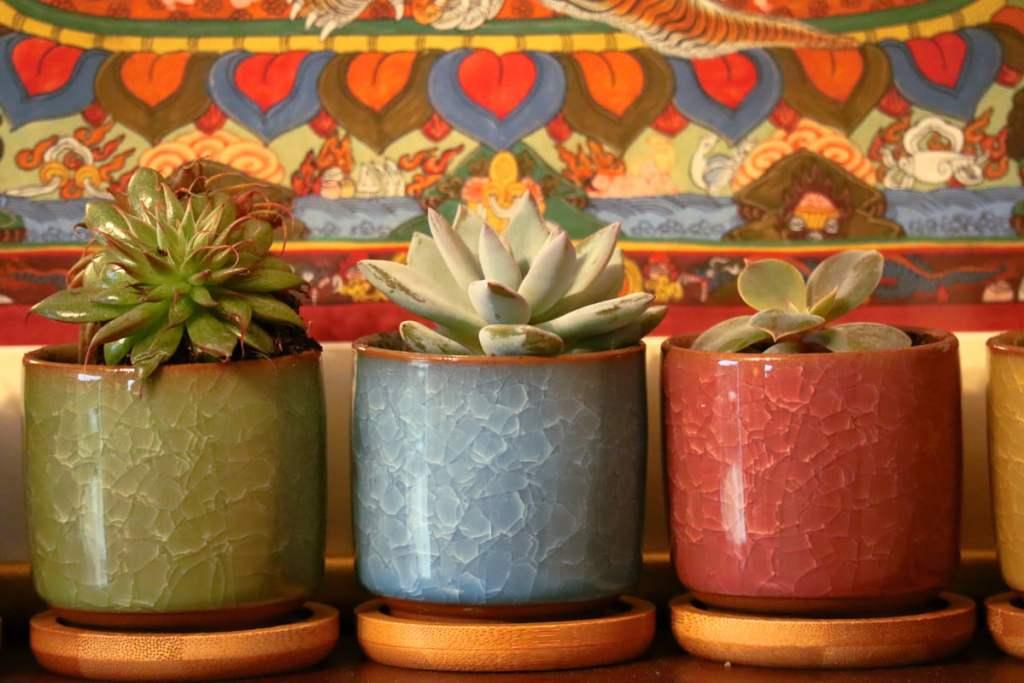 3 plantes grasses