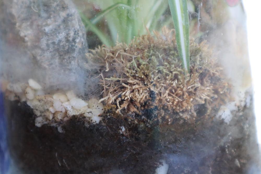 la mousse du terrarium n'est plus verte