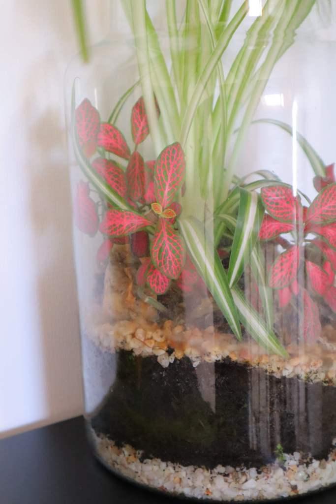 Le terrarium sale après quelques années ou mois