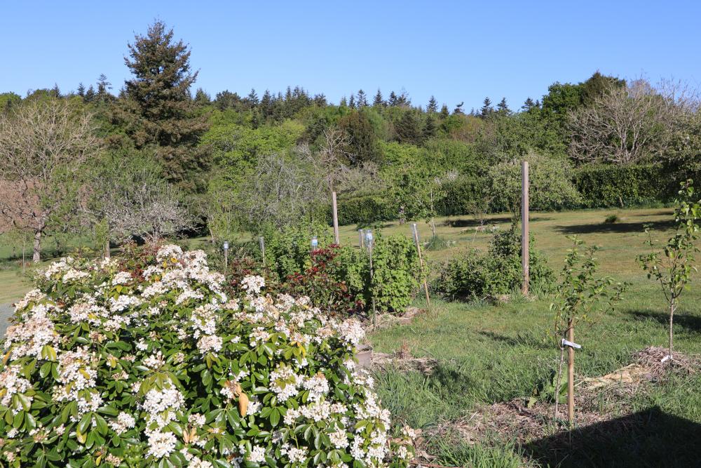 Le jardin en mai