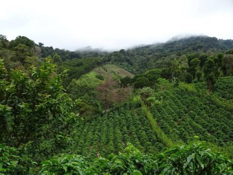 Finca Matagalpa 1400 meters
