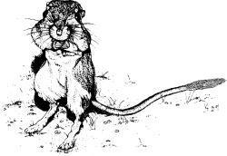 BIO 227:10: How to save the Giant Kangaroo Rat– start off