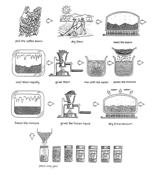 The diagram shows the process of coffee production and