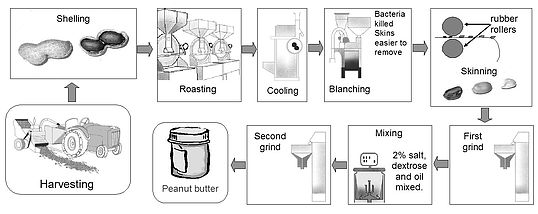 The sophisticated processes of making peanut butter