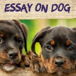 ESSAY ON DOG IN ENGLISH 250, 500 AND 1000 + WORDS