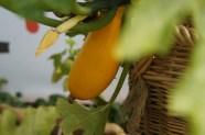 gelbe Zucchini...