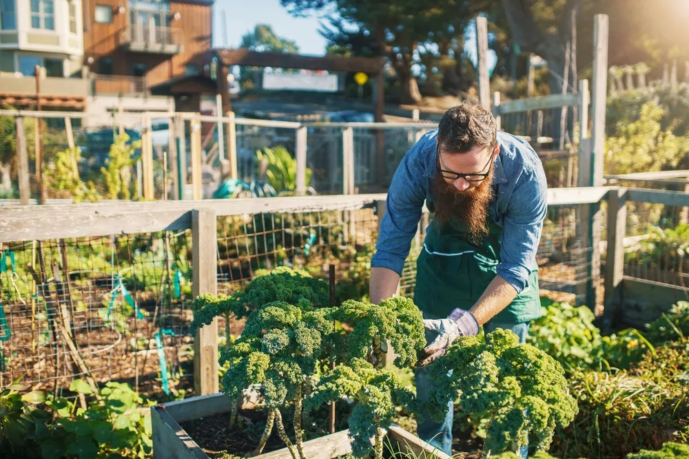 Design a Beautiful Urban Garden with These 26 Ideas via @extraspace