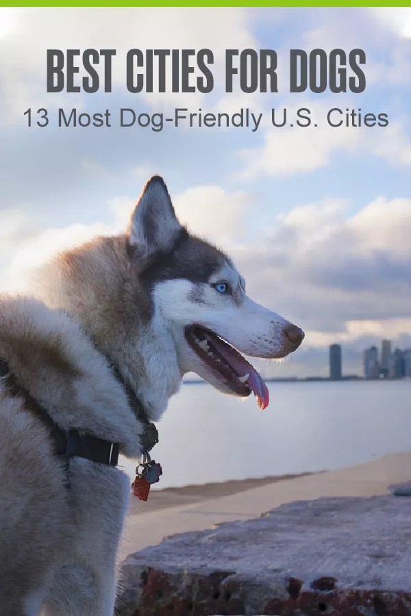 Want to move to a dog-friendly city with your four-legged friend? Check out this list of the top 13 best cities for dogs in America! via @extraspace