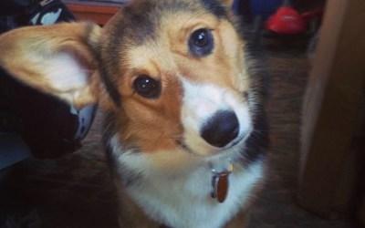 Jeremy and Olive (dog)