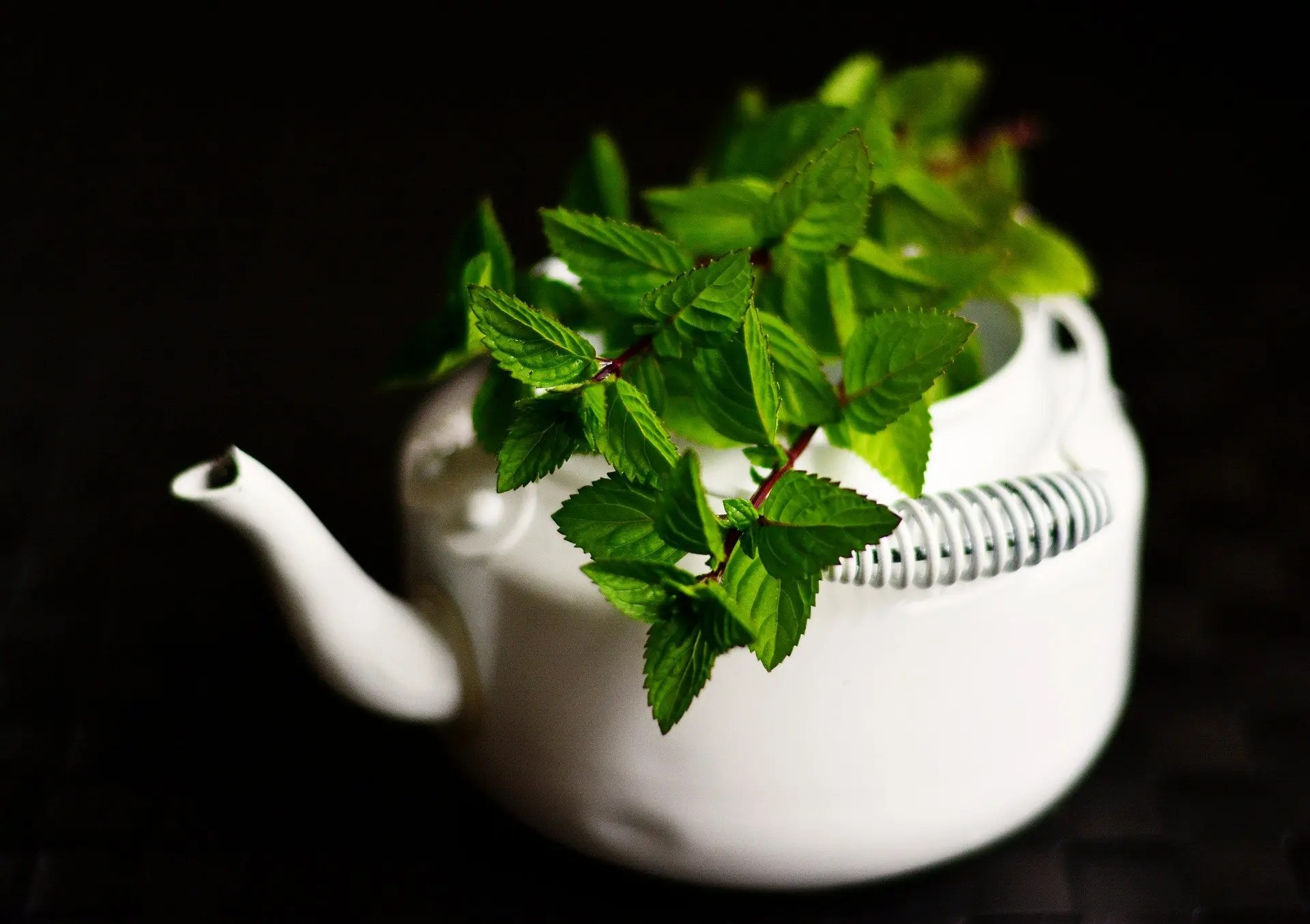Peppermint Essential Oil    20+ Uses