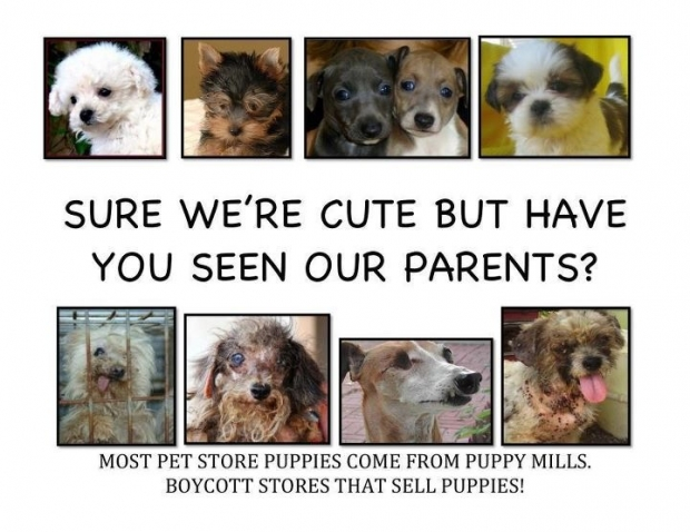 Adorable puppies on top while their parents' pictures on bottom are of uncared for dogs.