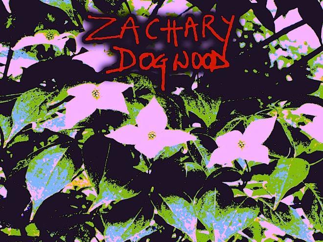 Zachary Dogwood 1